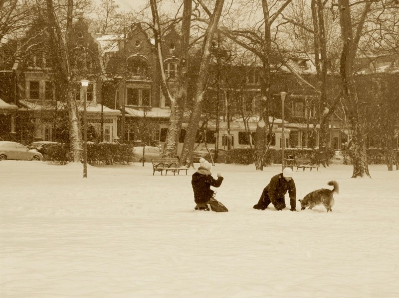 Photo of two people playing in snow with dog