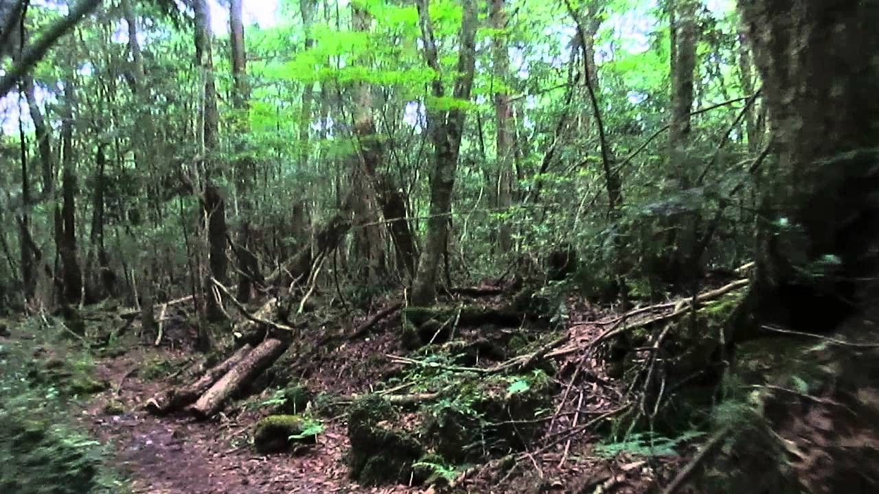 """Image of forest that inspired Aiko's """"Jukai"""""""