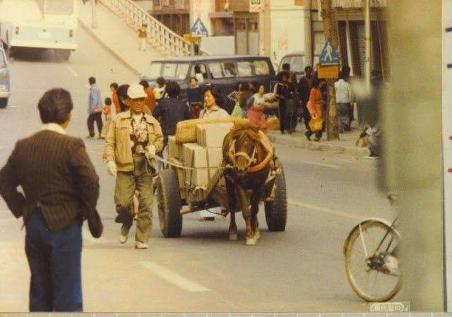 Photo of Korean cart pulled by mule